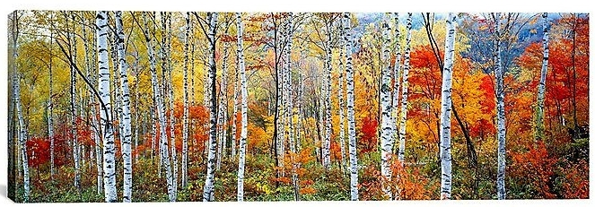 Wow, this fall picture with the birch trees really captured who I think reflects him the best.